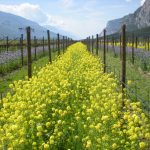 Sustainability and biodiversity in mountain viticulture: Ferrari Winery's vision presented at Expo Milano 2015