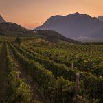 Sostenibilità e biodiversità nella viticoltura di montagna: l'impegno delle Cantine Ferrari presentato a Expo Milano 2015